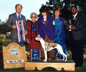 Preference was a Multi Best In Show and Best in Specialty Show Winner and was #1 Whippet in the U.S. 1994